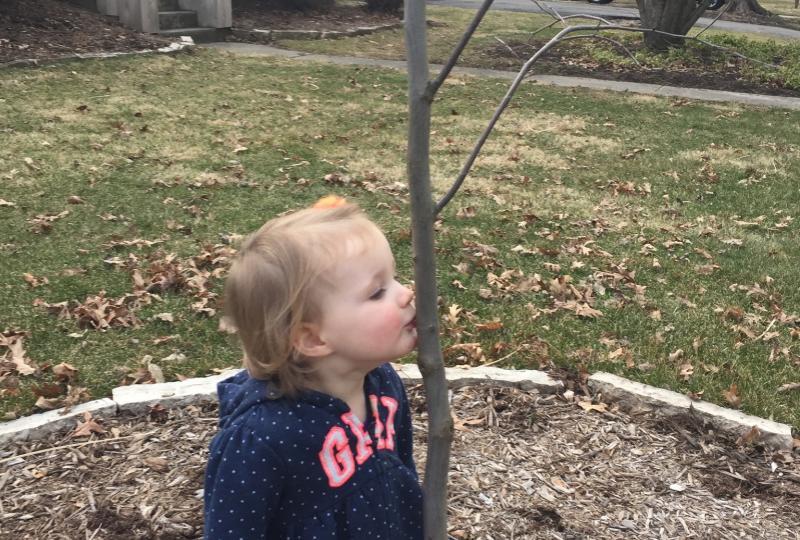 Small girl kissing trunk of redbud sapling